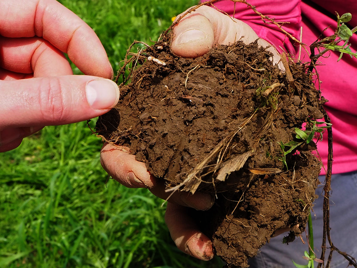 Soil at Cornell's Musgrave Research Farm in Aurora, New York. by Kitty Gifford